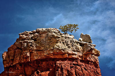 Photograph - Lofty Solitude by Christopher Holmes