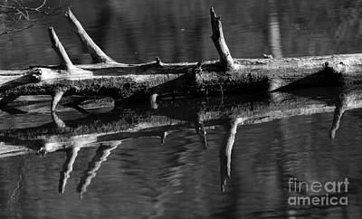 Photograph - Log In Water by JT Lewis