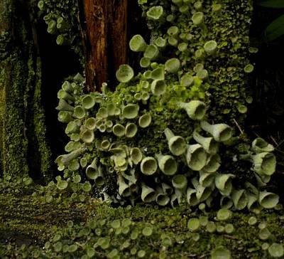 Painting - Log Shrooms 2 by Renate Nadi Wesley