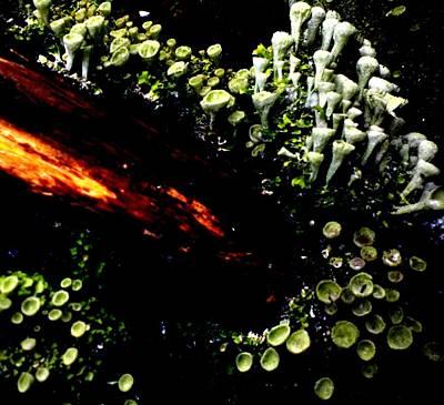 Painting - Log Shrooms by Renate Nadi Wesley