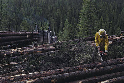 Logging Near Salmon, Idaho Art Print