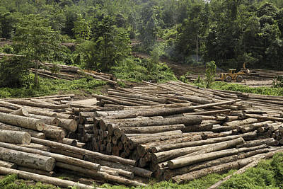 Logs In Logging Area, Danum Valley Art Print by Thomas Marent