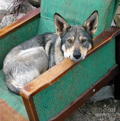 Photograph - Lola In The Armchair by Ausra Huntington nee Paulauskaite