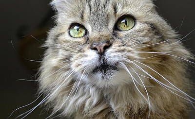 Photograph - Lolas Whiskers by Fraida Gutovich