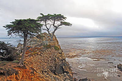 Photograph - Lone Cypress by Gary Beeler