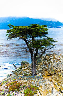 Photograph - Lone Cypress by Mickey Clausen