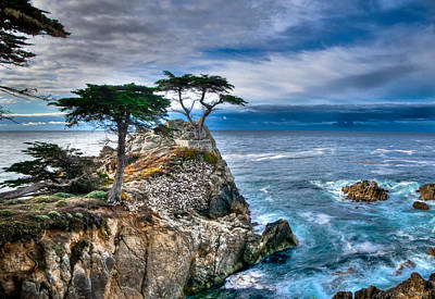 Lone Cypress Morning Art Print by Connie Cooper-Edwards
