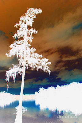 Digital Art - Lone Cypress Tree by Barbara Bowen