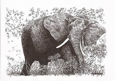 Pat Cross Drawing - Lone Elephant by Pat Barker
