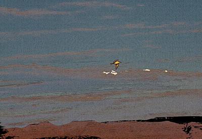 Lone Gull  Art Print