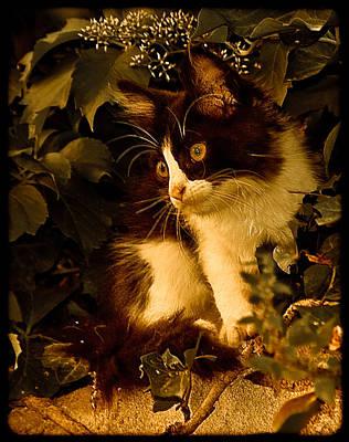 Athens, Greece - Lone Kitten Art Print