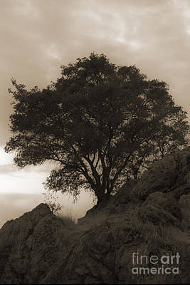 Photograph - Lone Oak 2 Sepia by Jim And Emily Bush
