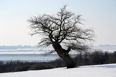 Lone Oak. Original