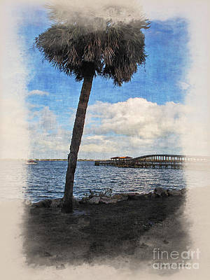 Photograph - Lone Palm Tree by Joan  Minchak