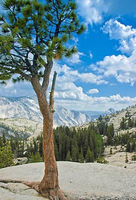 Photograph - Lone Pine At Half Dome by LeeAnn McLaneGoetz McLaneGoetzStudioLLCcom