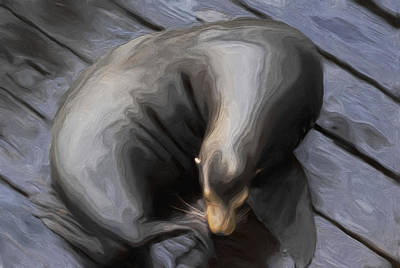 Lone Sea Lion Art Print by Jack Zulli