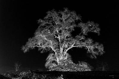 Art Print featuring the photograph Lone Tree 002 by George Bostian