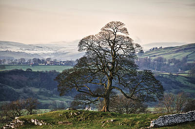 Y120817 Photograph - Lone Tree And Snow Scene In Peak District by Nuzulu