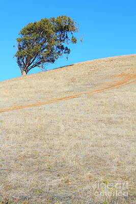 Lone Tree At Coyote Hills California . 7d10908 Print by Wingsdomain Art and Photography