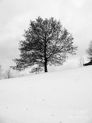 Photograph - Lone Tree by David Bearden