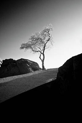 Photograph - Lone Tree by G Wigler