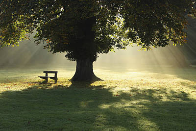 Park Benches Photograph - Lone Tree In Mist And Sunlight by Design Pics / Trish Punch