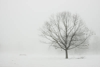 Photograph - Lone Tree In Winter Fog by Keith Webber Jr