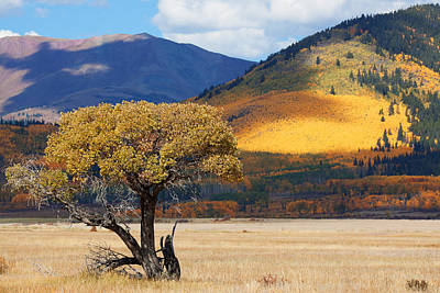 Art Print featuring the photograph Lone Tree by Jim Garrison