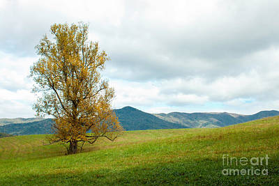 Photograph - Lone Tree by Lena Auxier