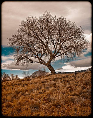 Photograph - Lone Tree by Mark Forte