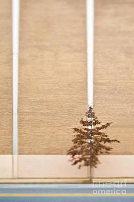 Lone Tree Next To A Building Art Print by Eddy Joaquim