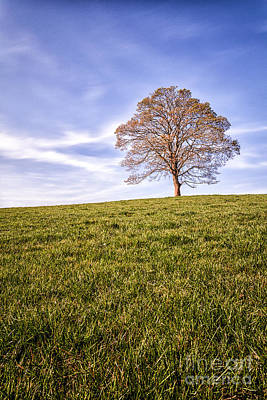 B-17 Wall Art - Photograph - Lone Tree On The Hill Colour by John Farnan