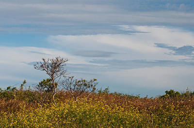 Art Print featuring the photograph Lone Tree On The Rhode Island Coast by Nancy De Flon