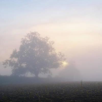 Lone Tree Art Print by Paul Simon Wheeler Photography