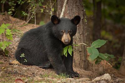 Photograph - Lonely Bear by Joye Ardyn Durham