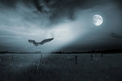 Pasture Digital Art - Lonely Bird In Moonlight  by Jaroslaw Grudzinski