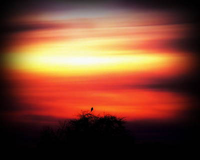 Photograph - Lonely Bird Sunset by Ms Judi