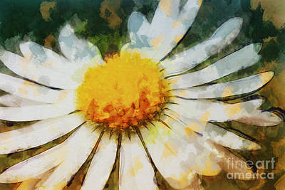 Lonely Daisy Art Print