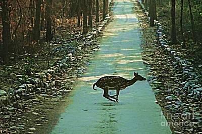 Photograph - Lonely Deer by Ankeeta Bansal