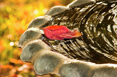 Photograph - Lonely Fall by Carolyn Marshall
