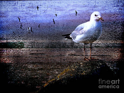 Photograph - Lonely Seabird by Karen Lewis