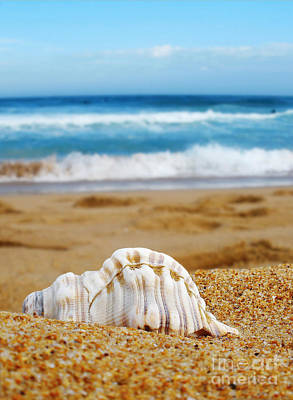 Beach Scenes Photograph - Lonely Shell by Kaye Menner