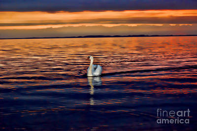 Photograph - Lonely Swan At Sunset by Alexandra Jordankova