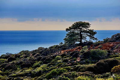San Diego Photograph - Lonely Torrey Pines by Russ Harris