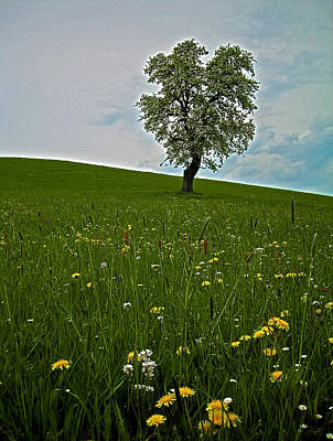 Photograph - Lonely Tree ...  by Juergen Weiss