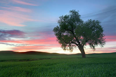 Lonely Tree At Sunset In Palouse Wheat Fields Art Print