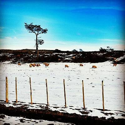 Sheep Photograph - Lonely Tree II by Carlos Avalos