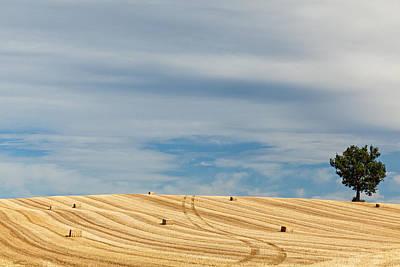 Y120817 Photograph - Lonely Tree In A Wheat Field by Danilo Antonini www.flickr.com/photos/danilo_antonini