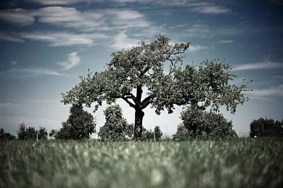 Vorarlberg Photograph - Lonely Tree by Markus Wäger