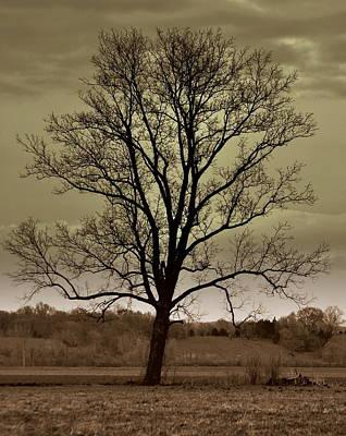 Lonely Tree Art Print by Marty Koch